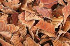 鸡血藤的功效与作用,鸡血藤的禁忌有哪些