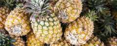 菠萝的种植方法过程