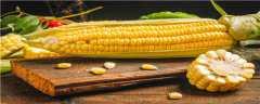 强硕168玉米品种介绍