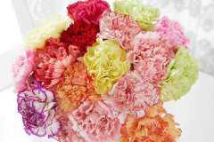 学生送老师什么鲜花比较好,教师节最适合送老师的花