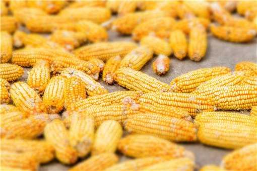 玉米价格创历史新高