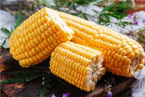 玉米价格还会持续上涨吗
