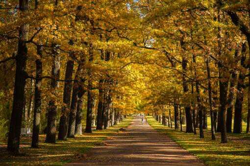 砍伐树木多少棵判刑