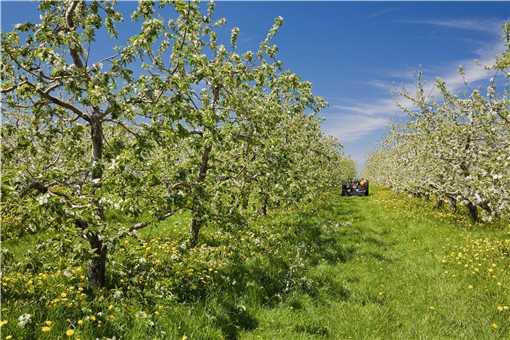 承包果园多少钱一亩