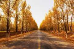 农民砍掉自己种的杨树后被判刑!具体是怎么回事?砍杨树违法吗?