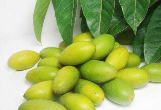 檀香橄榄的功效与作用及禁忌有哪些