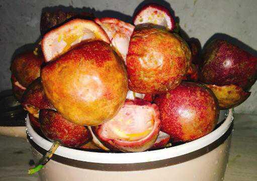 百香果皮的功效与作用 吃百香果皮的好处