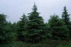 北方常见树种有哪些