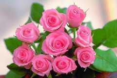 新买的盆栽玫瑰蔫了怎么办