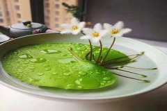盆栽水生植物有哪些,水生植物的种类