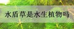 水盾草是水生植物吗