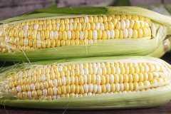 2021玉米价格走势,会涨价还是降价