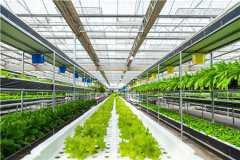 2021年农业生产补贴最新政策:国家农业补贴项目有哪些?主要包括这
