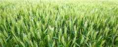 小麦一喷三防的配方药