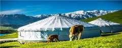 鲁西黄牛一年能长多少斤