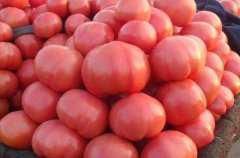 吃西红柿的好处和坏处,西红柿的食疗作用