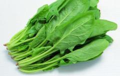 种植菠菜要如何浸种,浸种后又该如何种植