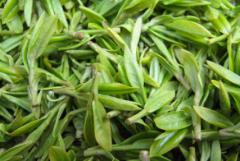 毛尖茶的种植管理要点,毛尖茶生长需要什么条件