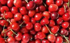 大樱桃和车厘子有什么区别