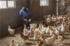 2021年养殖占地的最新规定:建养殖场需要什么手续?