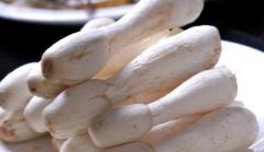 鸡腿菇出菇要注意什么,鸡腿菇好养吗,怎么养殖