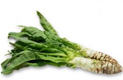 种植莴笋提高产量的施肥技巧有哪些,莴笋好养吗,怎么养殖