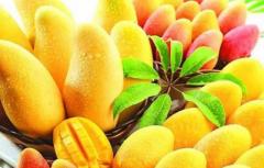 芒果定植前要做哪些准备,怎么做定植