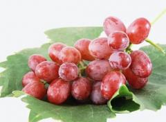 红宝石葡萄高产栽培技术,怎么施肥