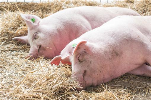 2021下半年猪价还会上涨吗