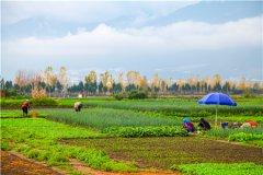 山东省耕地多少钱一亩?当地具体有多少亩耕地?