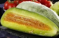 羊角瓜的种植技术,羊角瓜养殖要注意什么