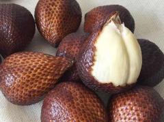 蛇皮果种植条件,蛇皮果生长需要什么条件