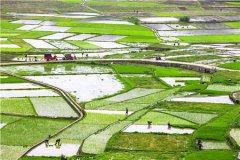湖南省耕地多少钱一亩?适合种植什么农作物?