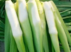 大棚栽培茭白注意事项,茭白好养吗,怎么养殖比较好