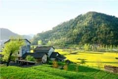 农村小型加工项目有哪些?推荐这三个项目!