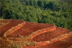 云南省耕地多少钱一亩?2021耕地地力保护补贴什么时候发放?