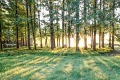 广西林地多少钱一亩?林地养殖占地的最新规定是怎样的?