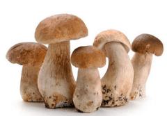 草菇木霉防治技术,草菇养护方法介绍