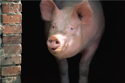 生猪屠宰管理条例2021