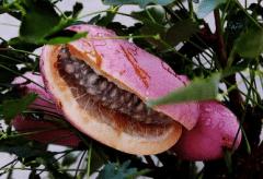 八月瓜怎么种植,养护技巧有哪些