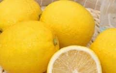 香柠檬和柠檬的区别,柠檬的功效与作用