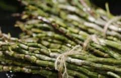 石斛的功效与作用及禁忌有哪些,石斛的最佳吃法