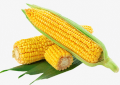 玉米如何科学种植,玉米种植方法