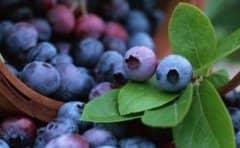 蓝莓花青素的功效与作用
