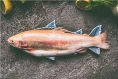 2021年水产新品种具体有哪些?这11个新品种通过国家审定!