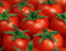 番茄需肥特点,番茄怎么施肥