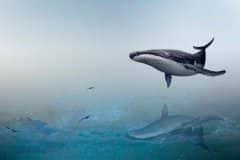 鲸鲨现身大连獐子岛!具体是怎么回事?看详细原因!