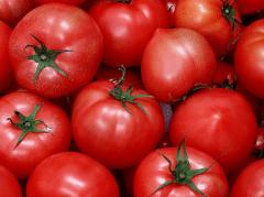 春夏茬番茄定植前后的管理,番茄应该好养吗,怎么养殖