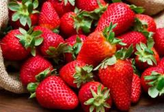 甜宝草莓苗如何管理,甜宝草莓苗的种植技巧是什么
