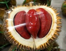 长得像橙子的榴莲好吃吗,红色的榴莲是什么品种